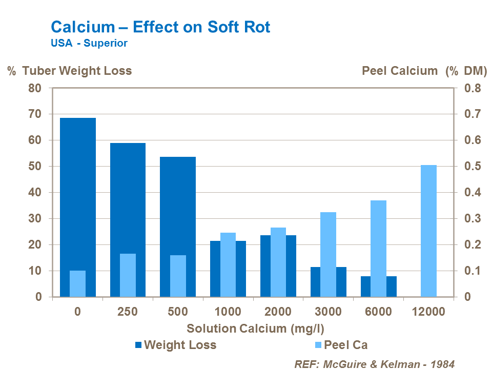 Calcium effect on potato soft rots