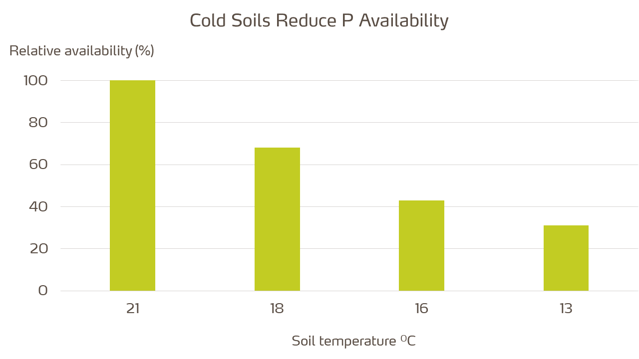 soil temperature and P availability - website.png