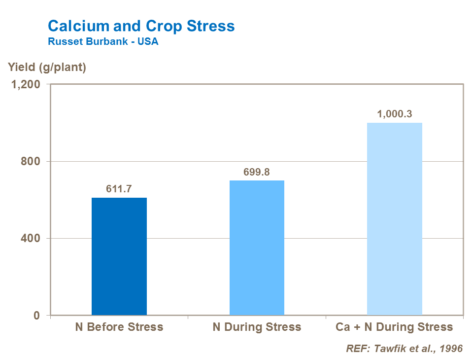 Calcium and potato crop stress