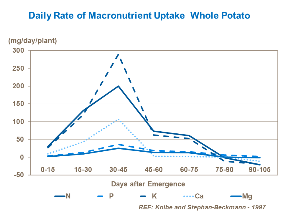 Daily rate of macronutrient uptake in potatoes